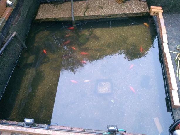 last few fish for sale