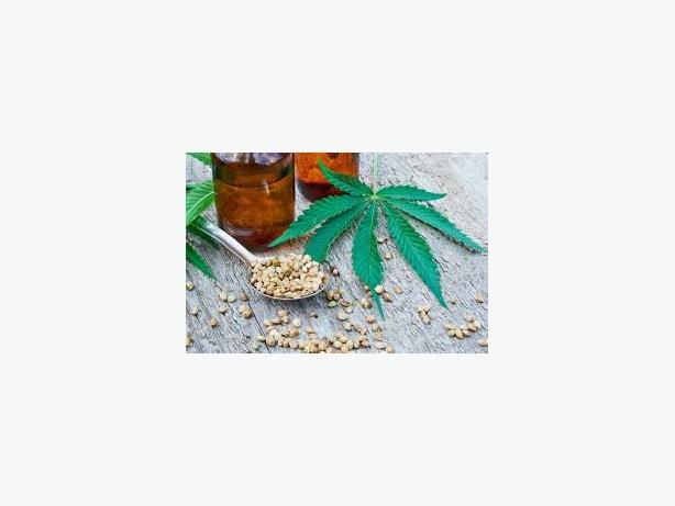 High Grade Medical Marijuana, Hash, BHO, HEMP OILS, THC OILS, Cannabis Oil