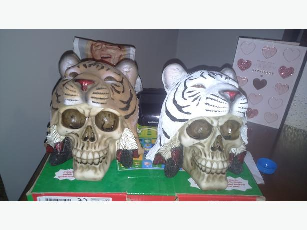 beautiful set of Tiger skulls