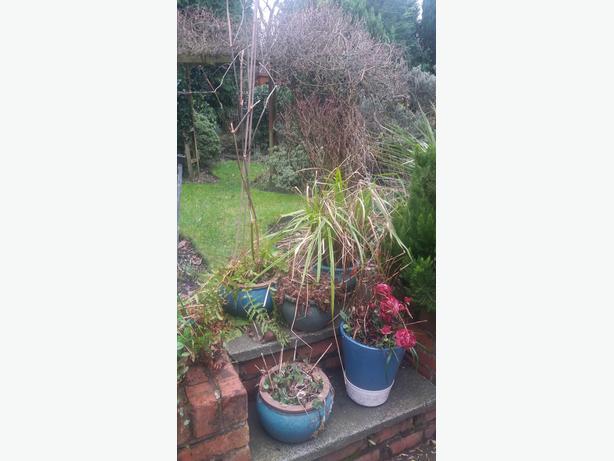 5 Plant Pots With Plants