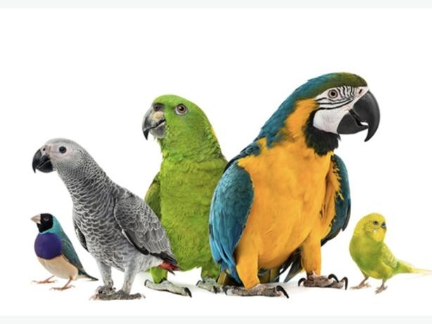 WANTED: WANTED BIRDS PARROTS