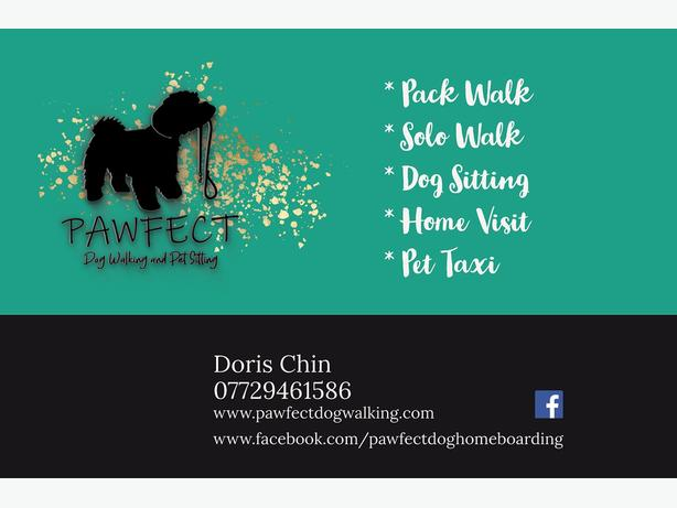 Pawfect dog walker and pet sitting in Hampshire