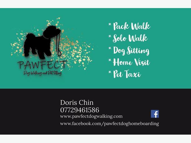 Pawfect dog walker Farnborough Farnham Hampshire