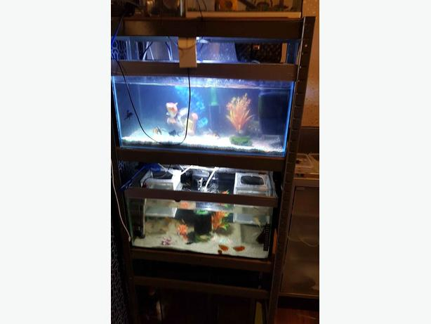 2x 2ft fish tanks with rack stand
