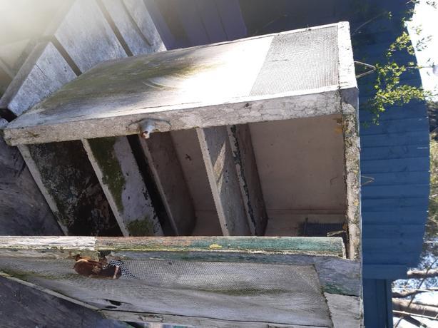 Larder/butchers metal cupboard