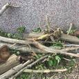 Wood for log burners