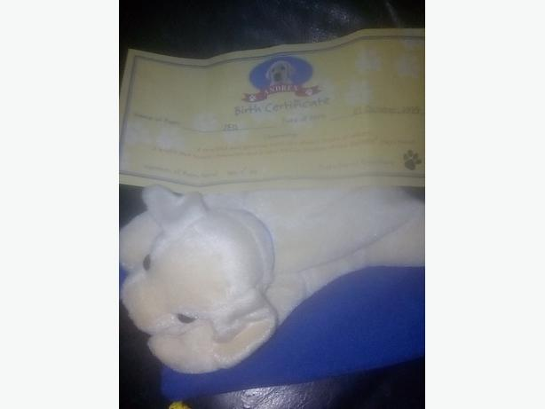 andrex beanie puppy in a bag