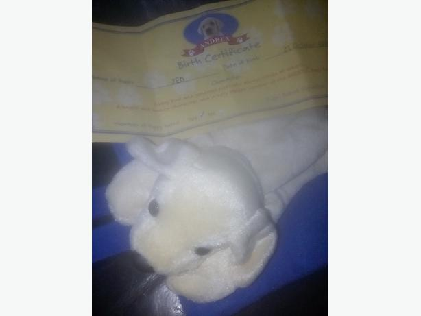 andrex puppy in a bag