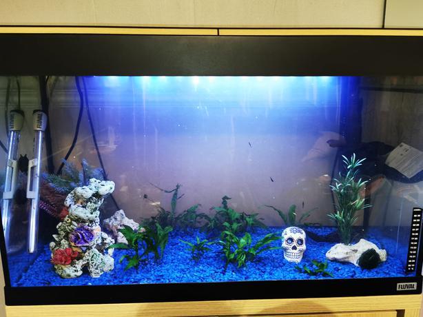 Fluval 125 litre Fish (shrimp) tank for sale! (complete setup with 200+ shrimp)