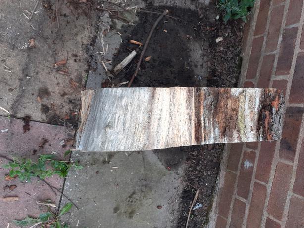 FREE: Log Slice