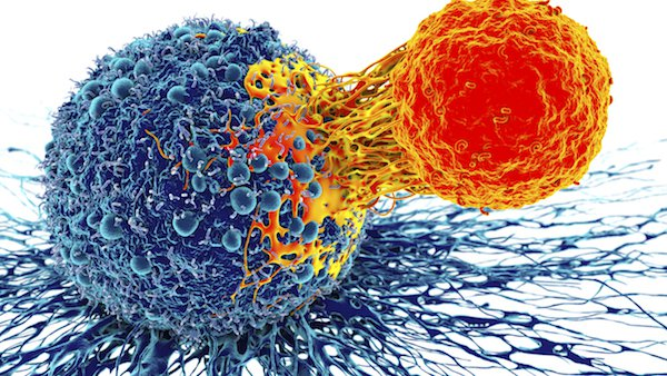 CAR-T therapy: Genetically-engineered cells that fight blood cancer