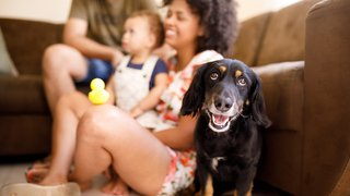 Pet ownership may be a good way to boost your baby's health