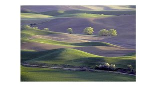 Rolling hills with sparse trees