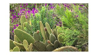 Cactus and purple flowers
