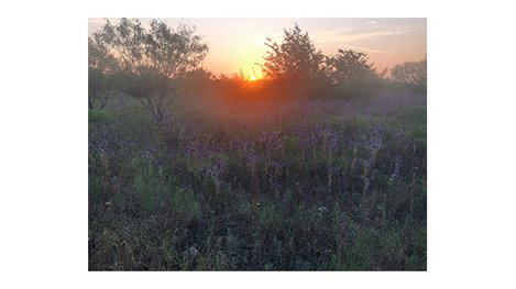 A sunrise over a field of wildflowers and trees