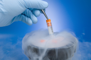 Cryopreservation of embryo