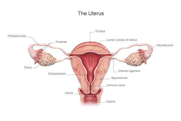 What's going on with my uterus? 3 conditions related to