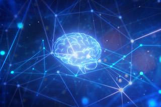 Neuro_OBI_ODonnel_320