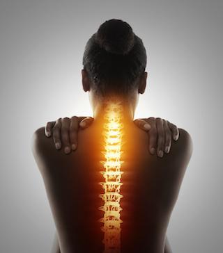 spine image 320