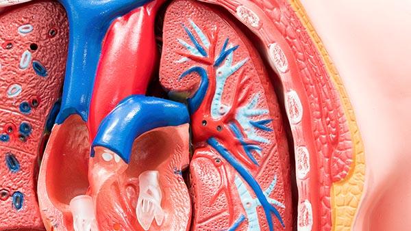 Aortic Regurgitation (Aortic Insufficiency)