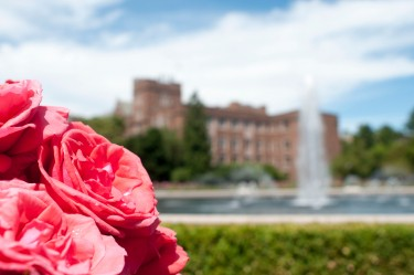 Roses from the rose garden surrounding Drumheller Fountain.