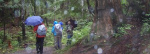 Tuesday Trekkers enjoying the day in the woods