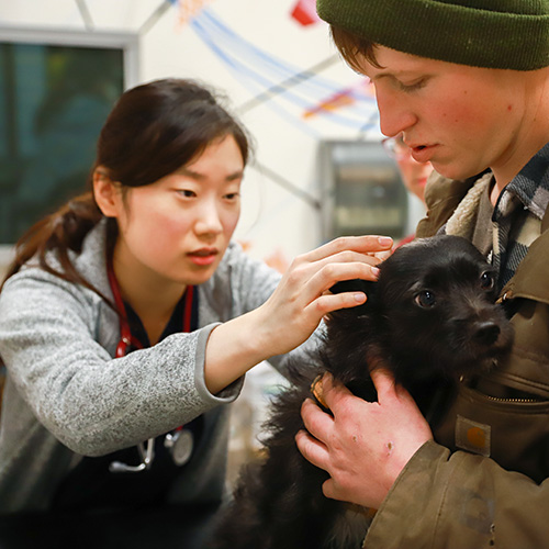Image of veterinarian examining a dog
