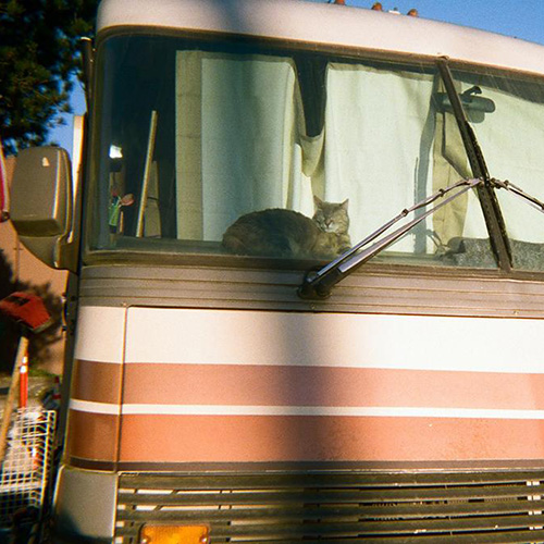 A cat named Chanel sunbathes in her favorite spot in a motorhome