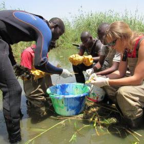 Researchers process the vegetation from a sampling point in northwestern Senegal