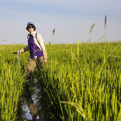 Image of woman studying rice quality in a field in Cambodia