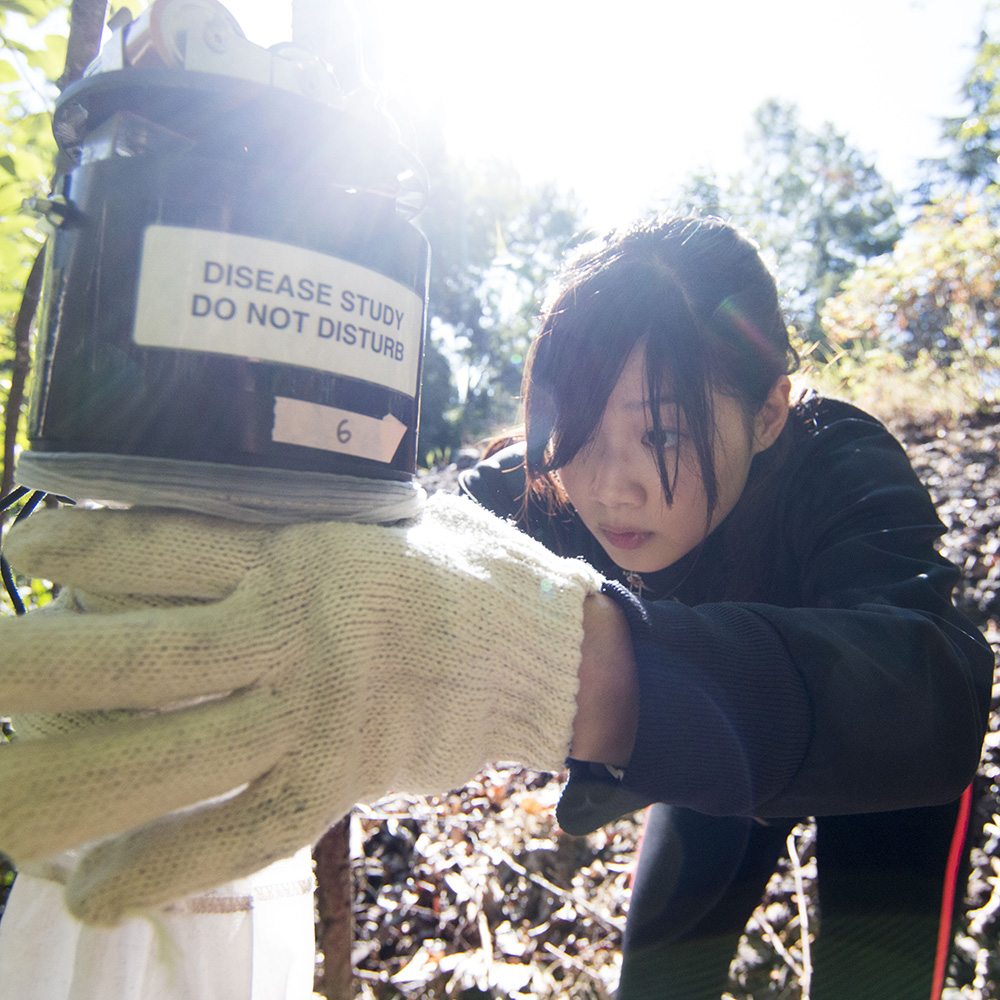 Image of a student setting a mosquito trap for a disease study