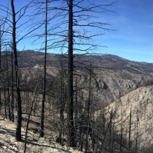 View near Loup Pass showing the impacts of the 2014 Carlton Complex wildfire