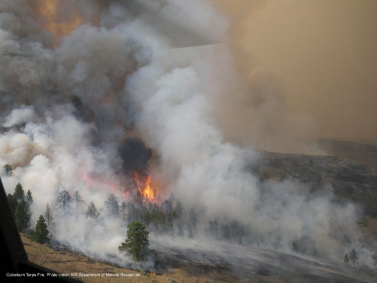 Colockum Tarps Fire / WA Department of Natural Resources