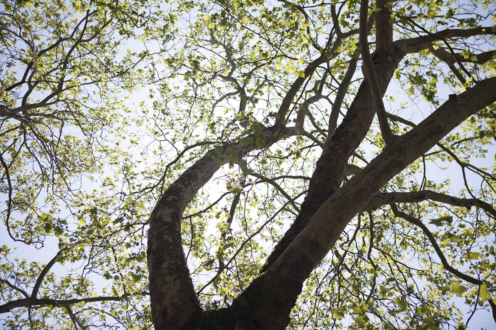 Image of tree in sunlight