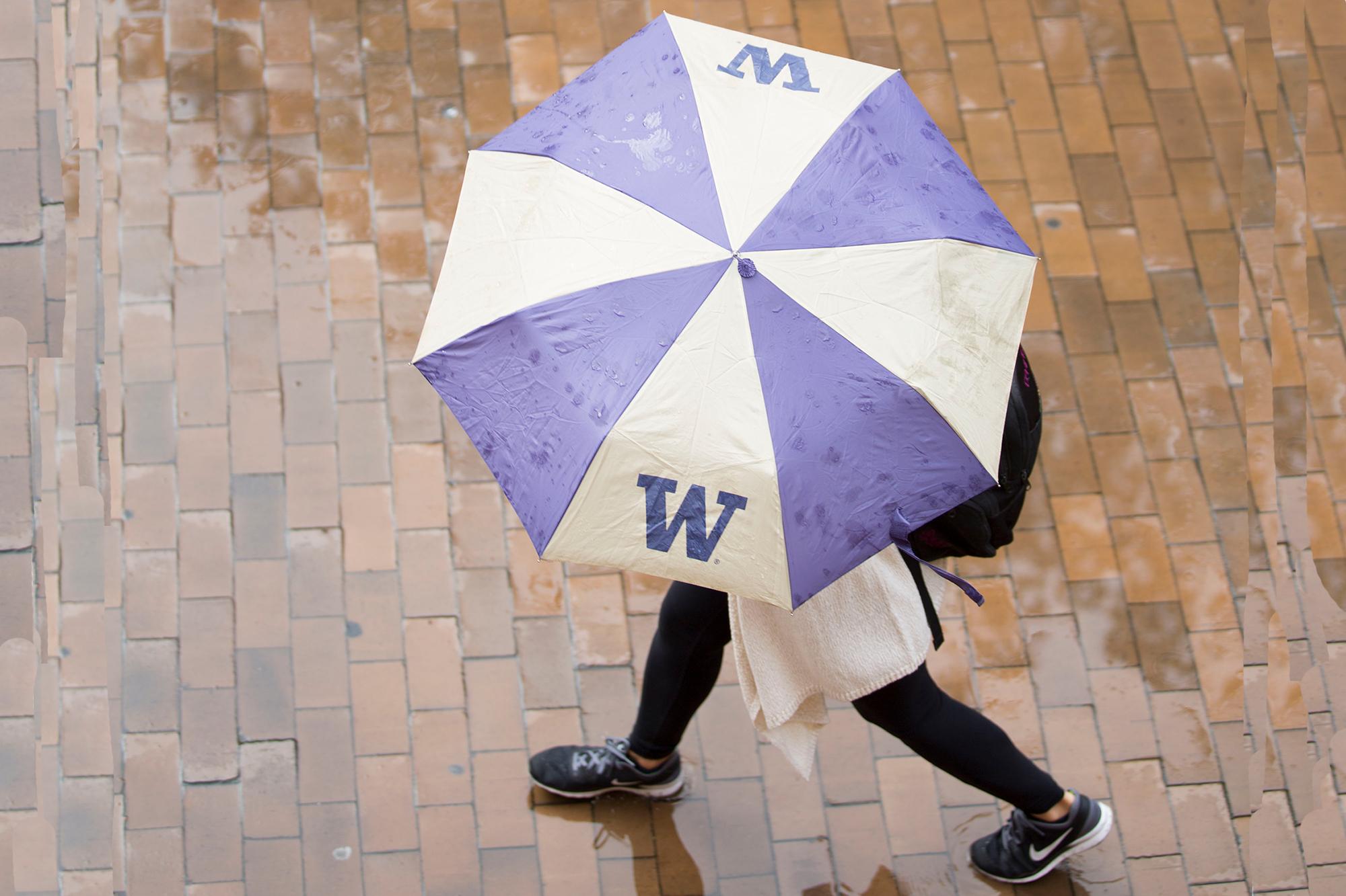 Student walking with UW umbrella