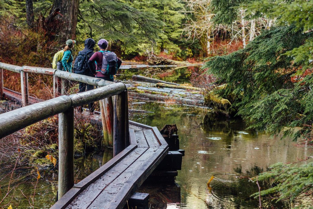 A group of three hikers stand on a wooden bridge admiring the forest and swampland.