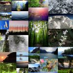 """The winning """"Intra Mural"""" Arts Competition photo collage made up of nature photos"""