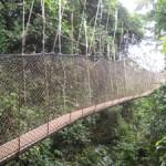 Kakum Rain Forest