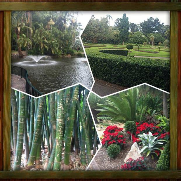 2013 Australia Study Abroad - Botanical Gardens
