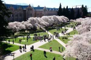 Campus Walker Cherry Blossoms Spring 2016