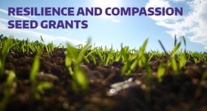 Grass seedlings image