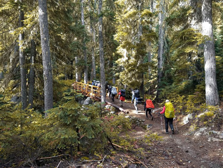 Photo of class hiking in forest