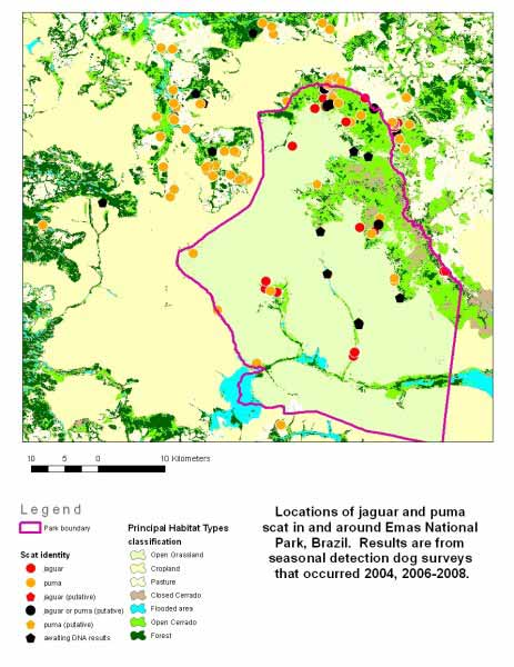 Map that shows where jaguar and puma scat was detected in and around the Emas National Park, Brazil. Scat surveys using detection dogs occurred during 2004, and 2006-2008.