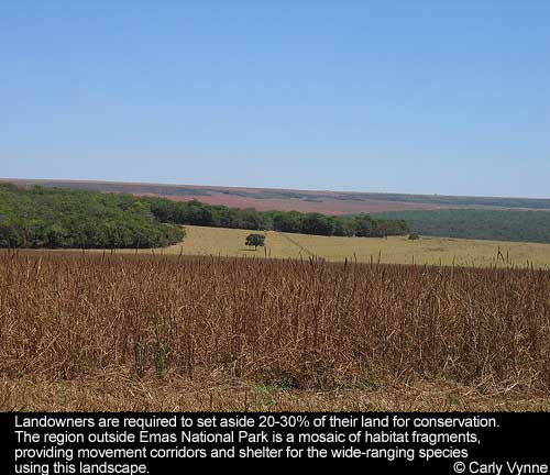Shot of the plains of the Cerrado. Caption embeded in photo reads: Landowners are required to set aside 20-30% of their land for conservation. The region outside Emas National Park is a mosaic of habitat fragments, providing movement corridors and shelter for the wide-ranging species using this landscape.