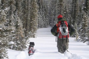 A researcher and black lab trekking through snow that reaches the researcher's knees