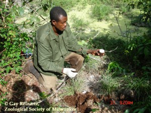 Local ranger crouches to the ground and collects elephant dung samples for research