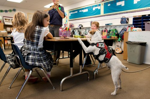 a group of children sit at a table listen to presentation while Casey, a little white and brown Jack Russel Terrier greets the children by standing at the table with his paws on it.