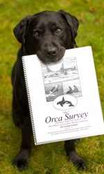 "Isis, a lab, sits in the grass outside and holds an ""Orca Survey"" booklet in her mouth"