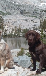 Shrek, a chocolate lab mix, and Lulu, an Australian shepherd, sit side-by-side on a rocky ledge with a sunny mountain and lake in the background