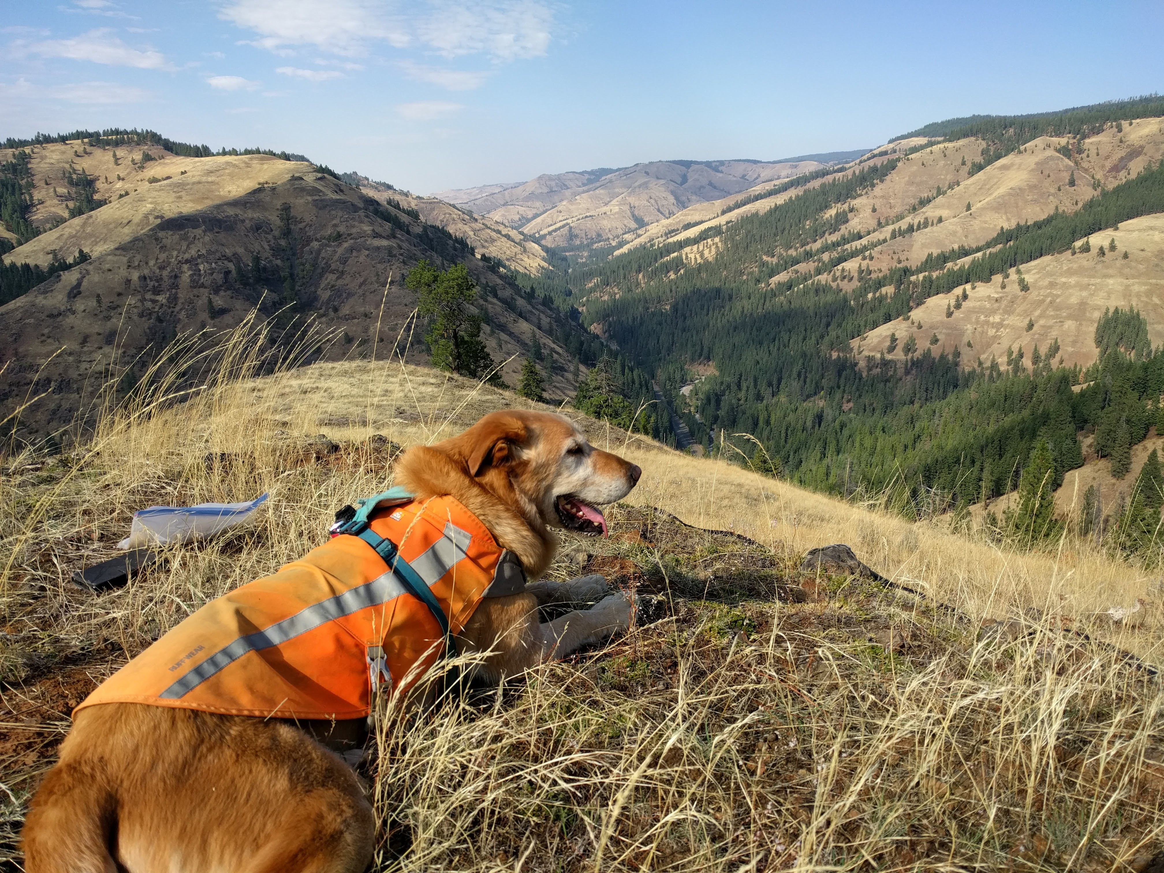 Yellow Lab lays in grass on top of hill with mountains in distance